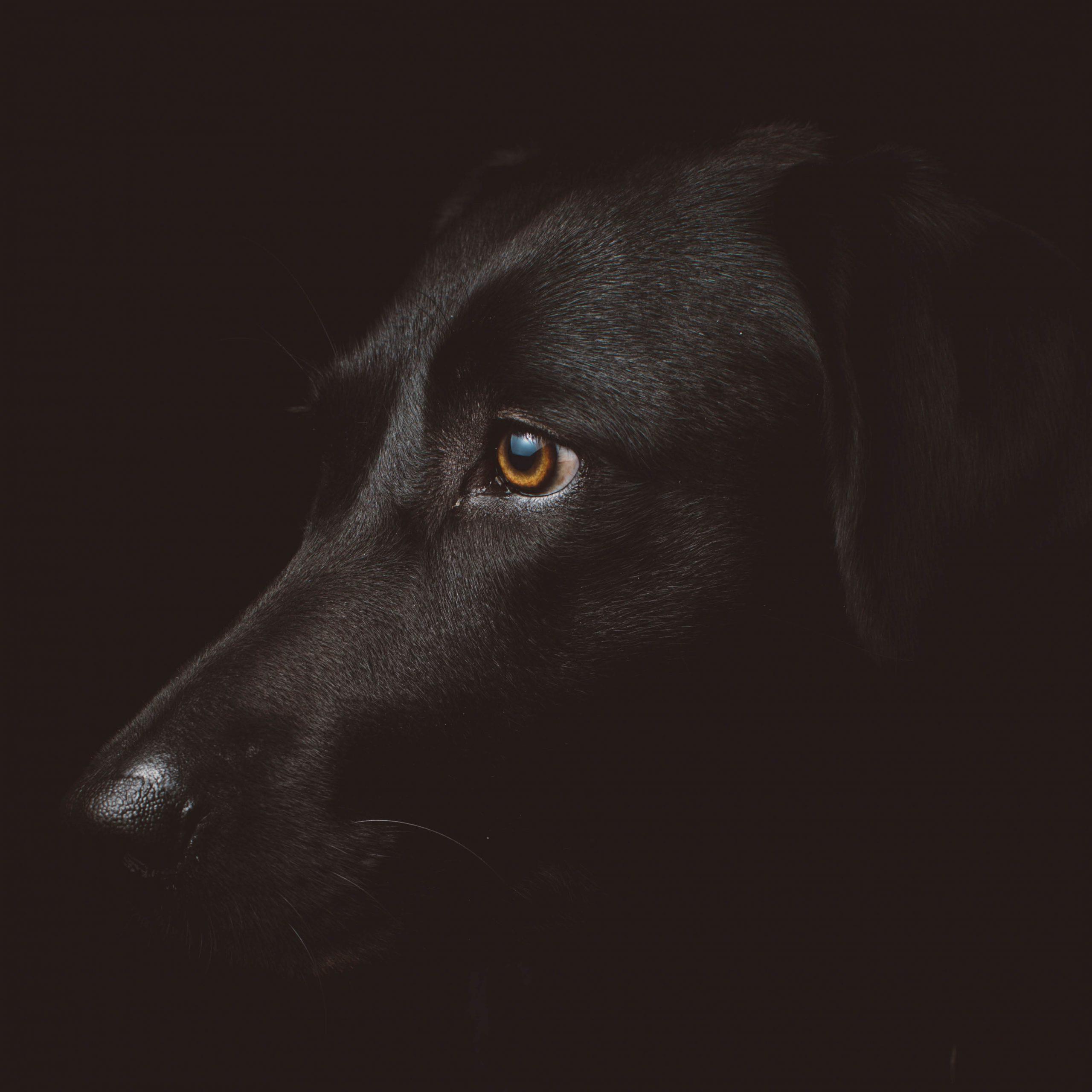 ANWB . Wandelen met je hond